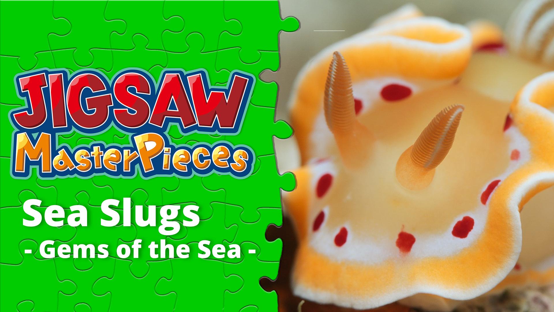 Sea Slugs  - Gems of the Sea -